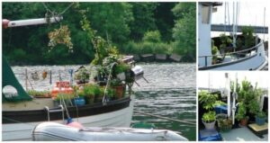 How to Start Gardening on a Boat