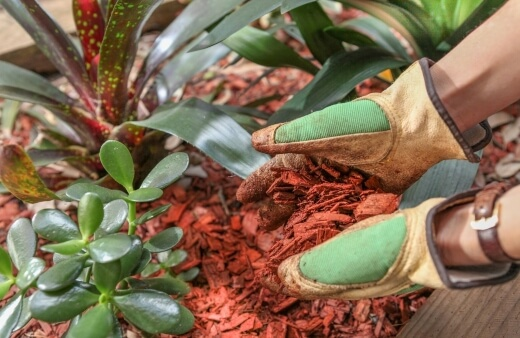 Mulch acts is a couple of ways; by protecting the soil from direct sunlight and heat, and by adding organic matter as it breaks down