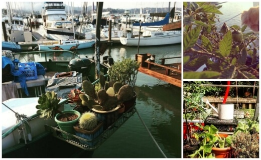 Things to Consider for a Boat Garden