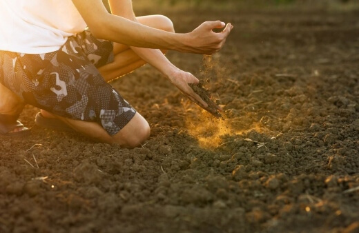garden soil problems and solutions