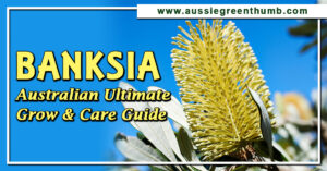 Banksia Australian Ultimate Grow and Care Guide