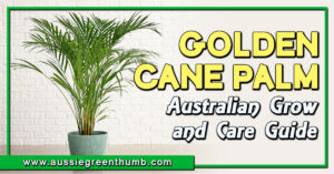 Golden Cane Palm Australian Grow and Care Guide