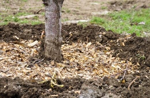 Leaf Litter as Mulch